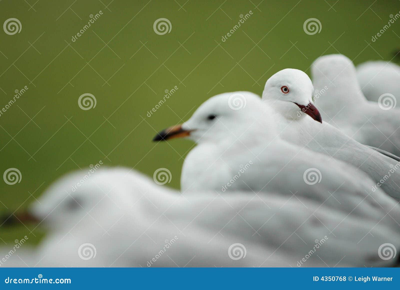 Ligne des mouettes blanches