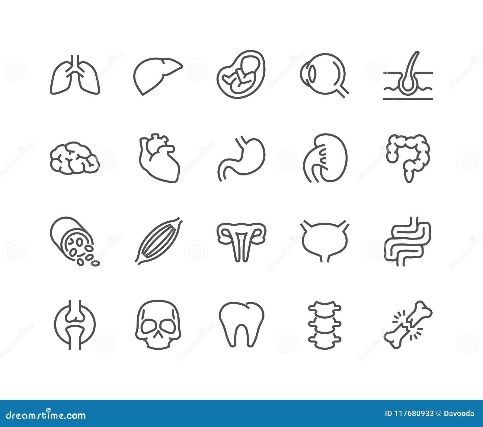 Ligne icônes d organes