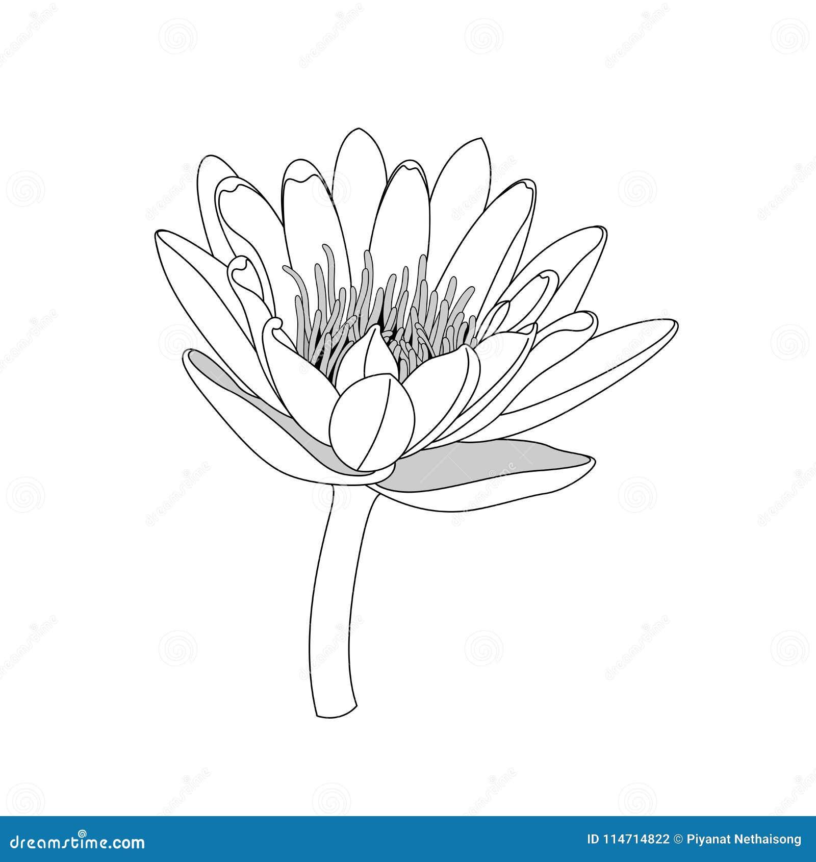 Ligne Simple Fleur De Lotus Noir Et Blanc D Isolement Li D