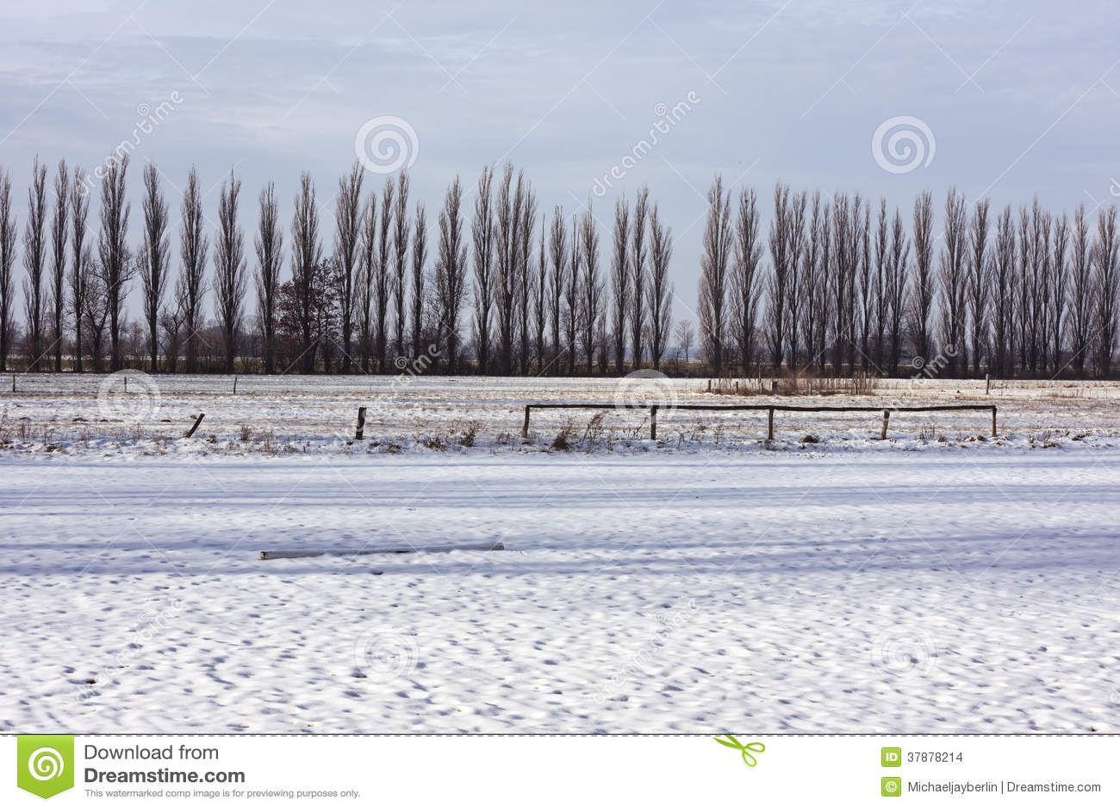 Lijn van bomen achter sneeuw behandeld gebied