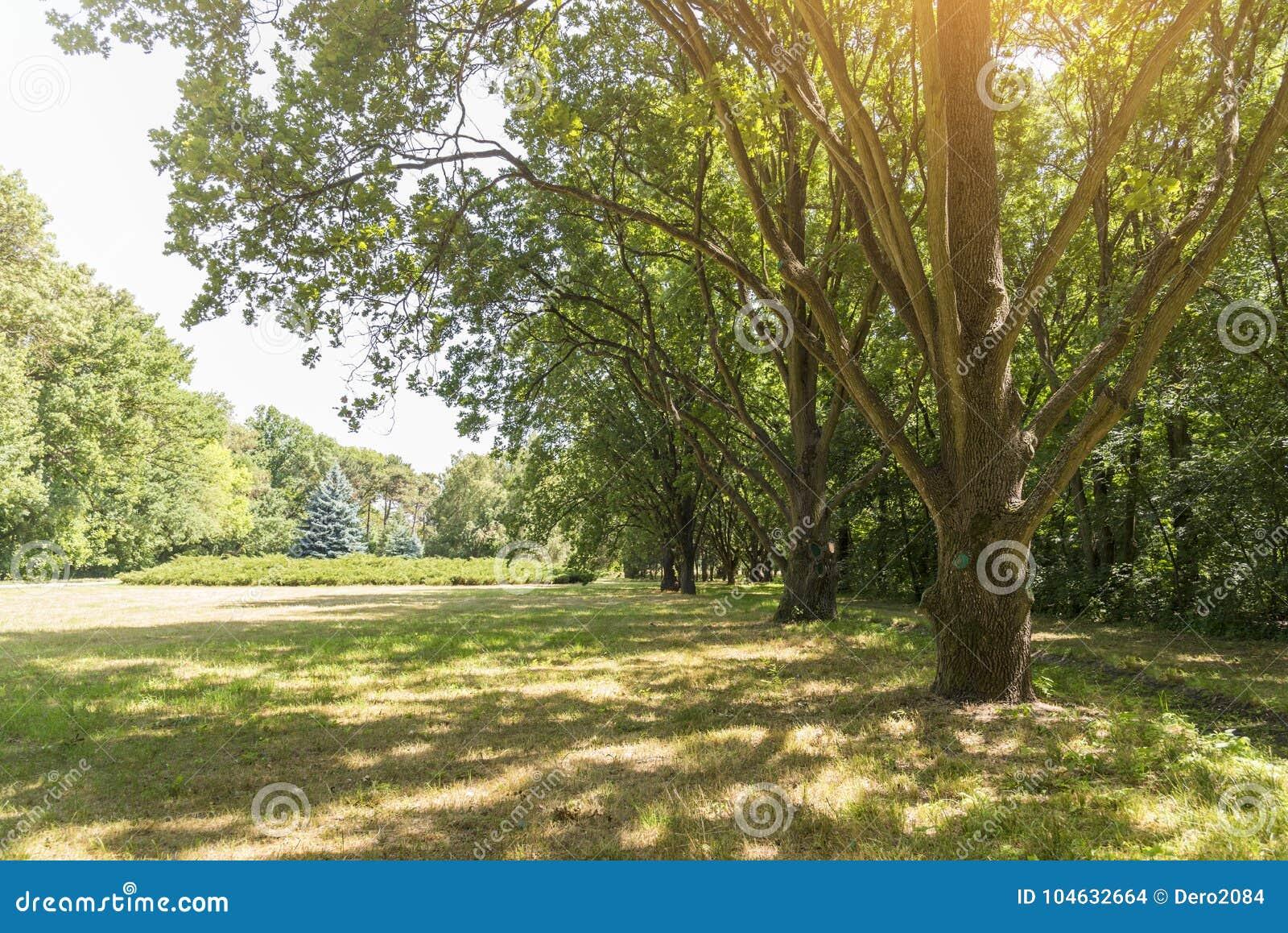 Download Lijn Van Eiken, Dendrological-Park Van De Nationale Reserve Askania-Nova, De Oekraïne Stock Foto - Afbeelding bestaande uit biosfeer, gazon: 104632664