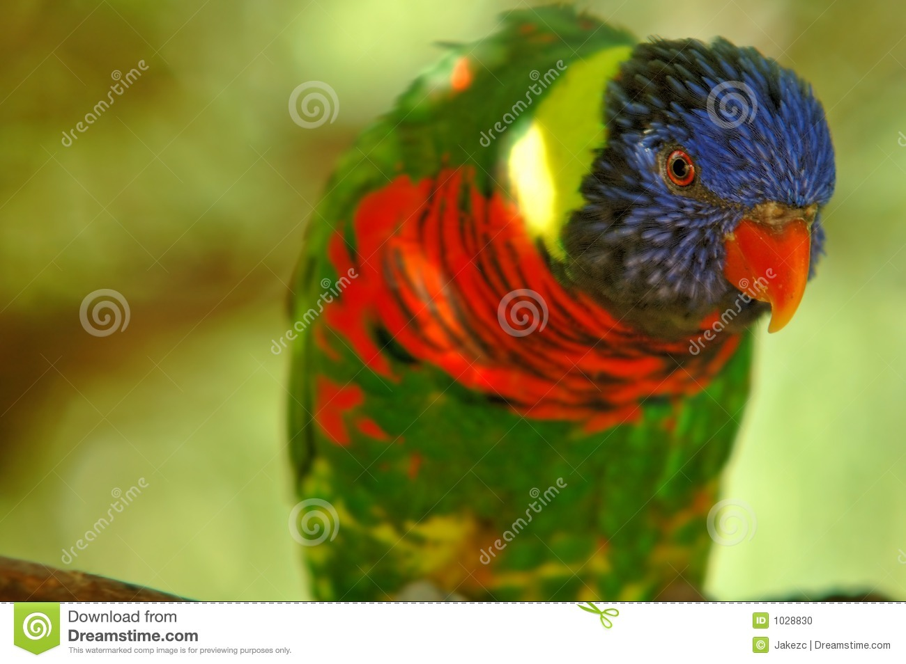 Download Like a rainbow stock photo. Image of exotic, dombes, black - 1028830