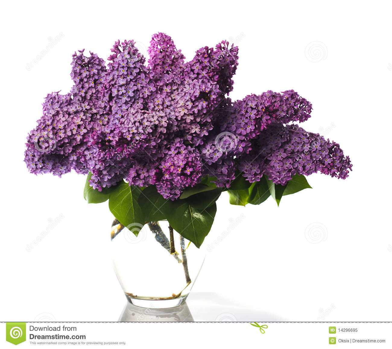 Lilac Bouquet Isolated On White Royalty Free Stock Photo - Image ...