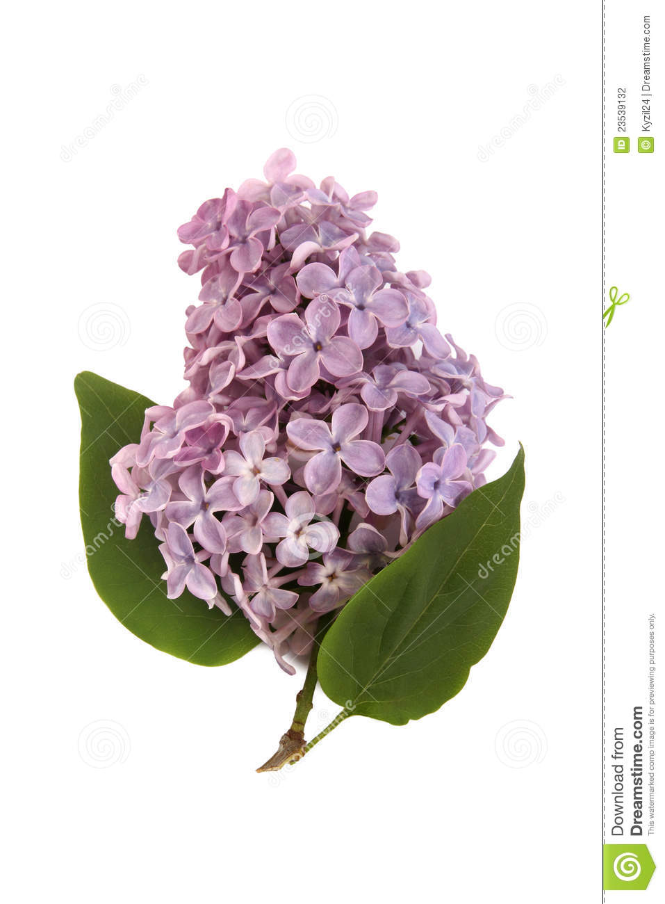Lilac Branch Stock Photography Image 23539132
