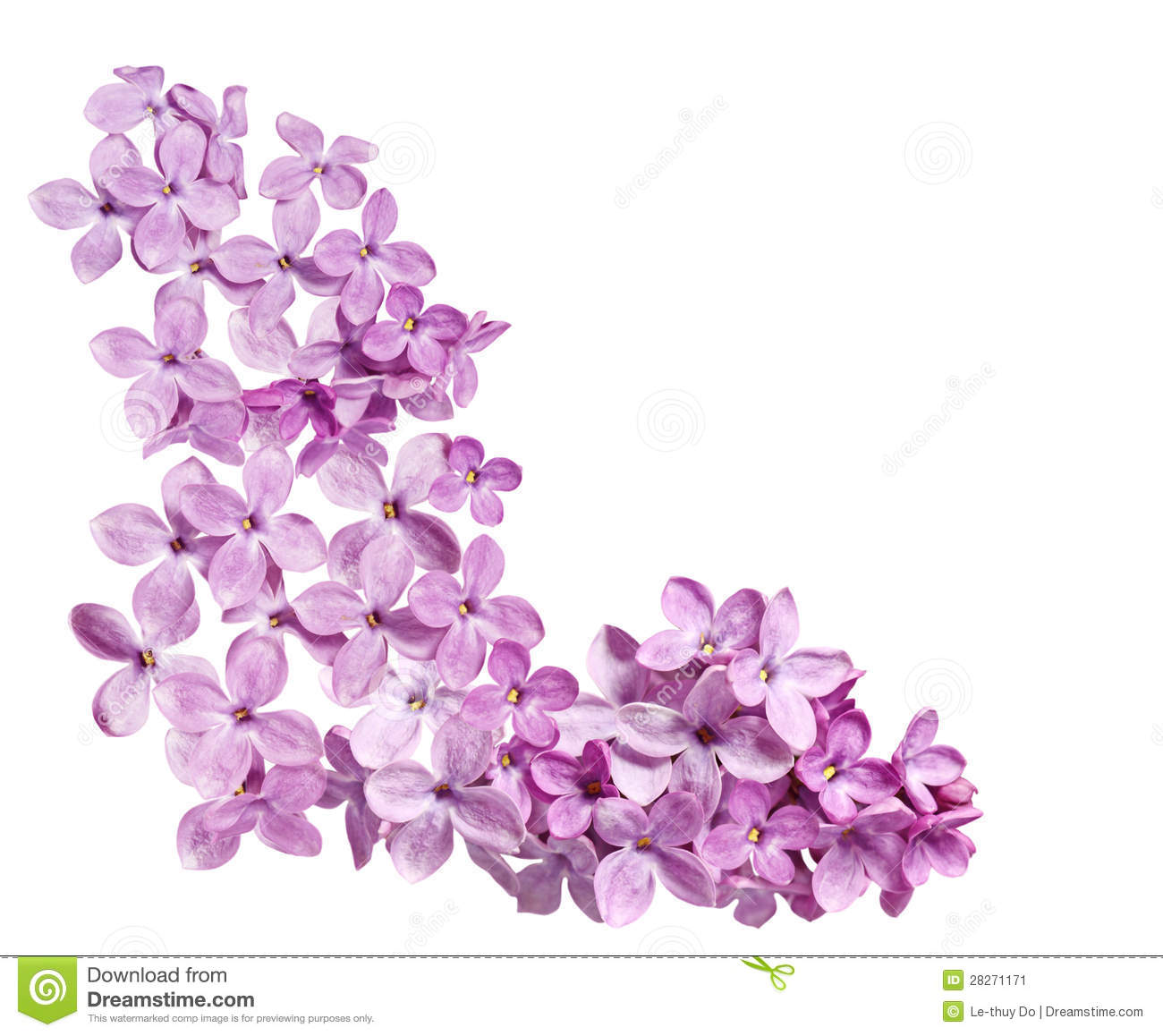 Lilac Corner Stock Image Image Of Colorful Floral Outdoor