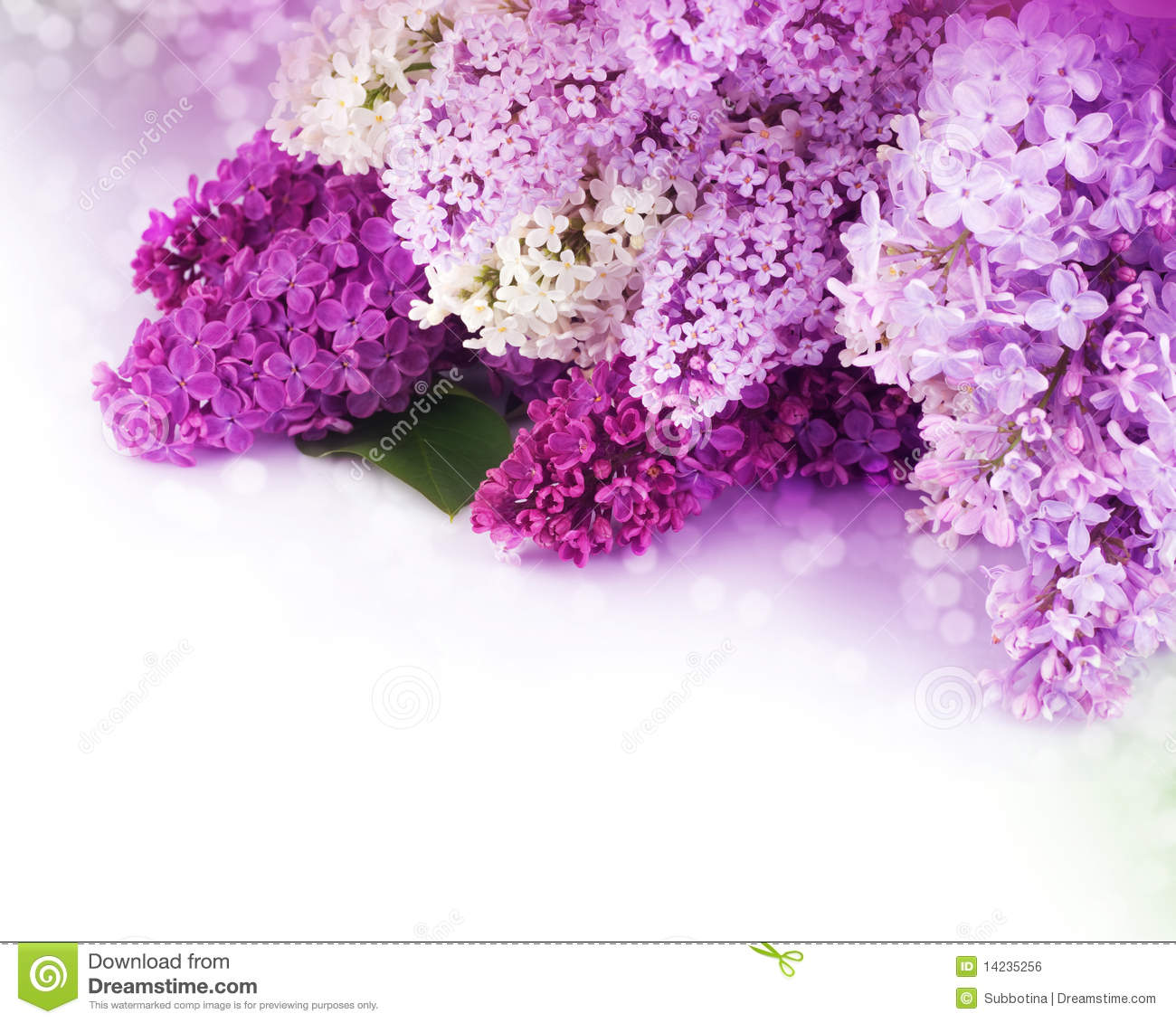Lilac flowers bouquet stock photo image of bunch element 14235256 lilac flowers bouquet izmirmasajfo