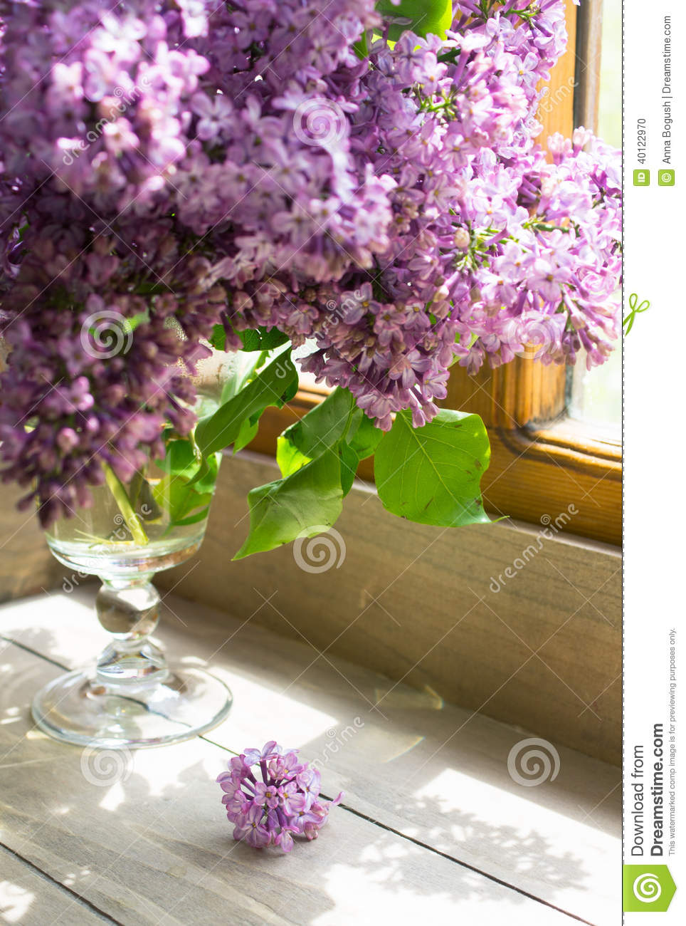 lilac flowers in the vase stock photo image 40122970. Black Bedroom Furniture Sets. Home Design Ideas