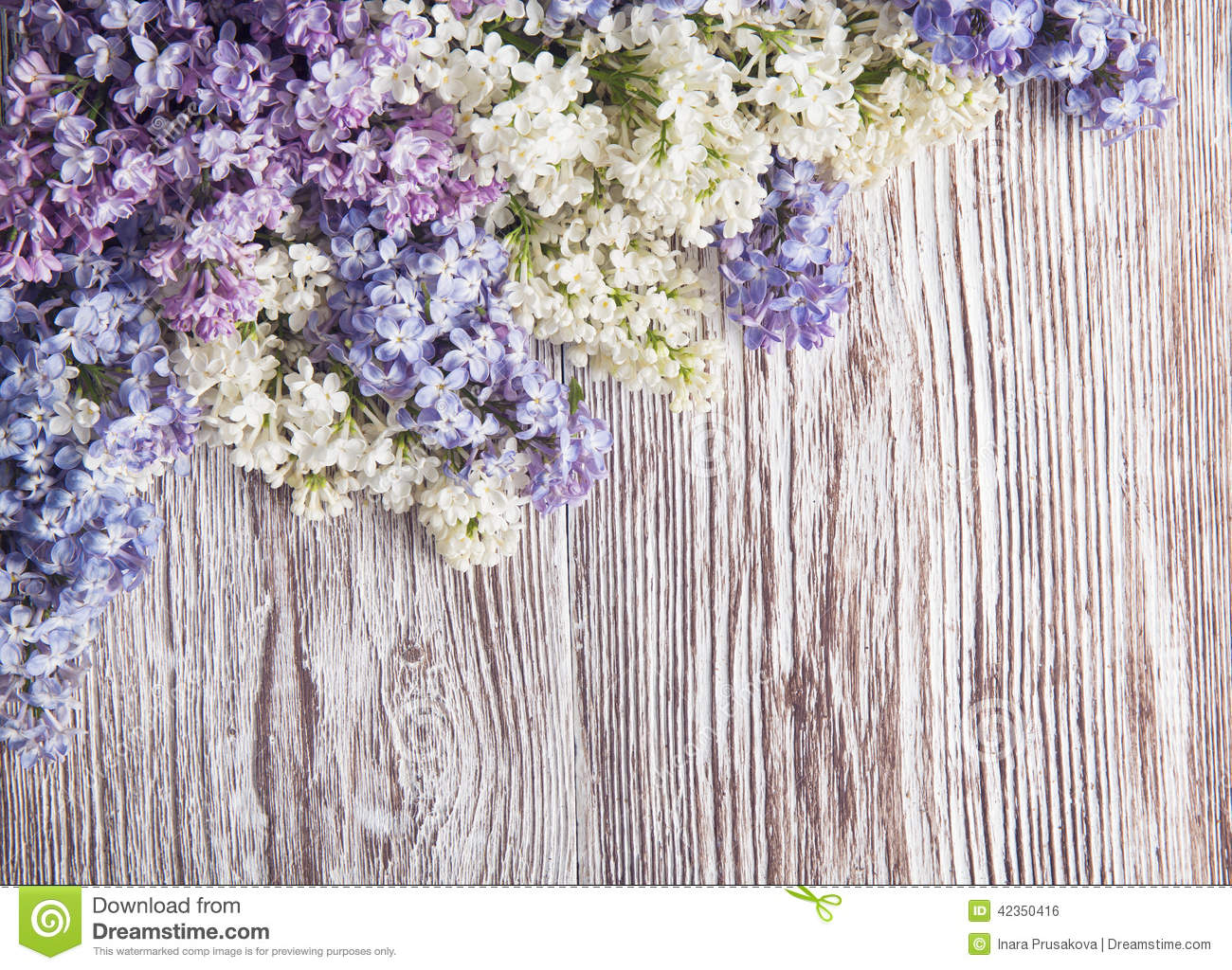 Lilac Flowers On Wood Background Blossom Branch On Wood Stock Photo Image 42350416