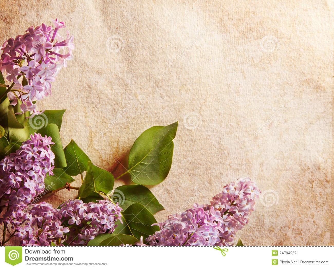 Lilac Frame Stock Photo Image Of Purple Mauve Border