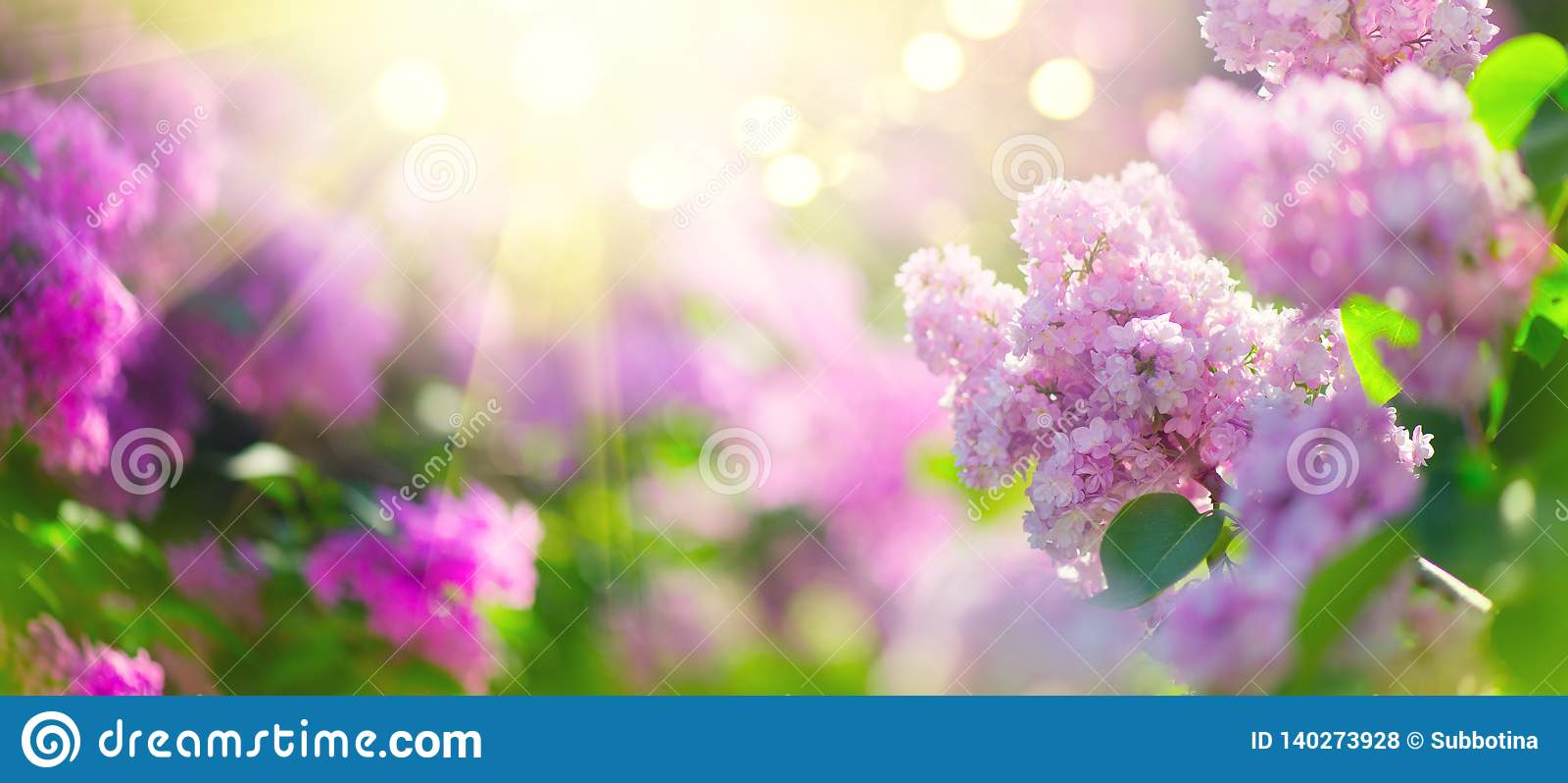 Lilac van de de bos violette kunst van de lentebloemen het ontwerpachtergrond Bloeiende violette lilac bloemen