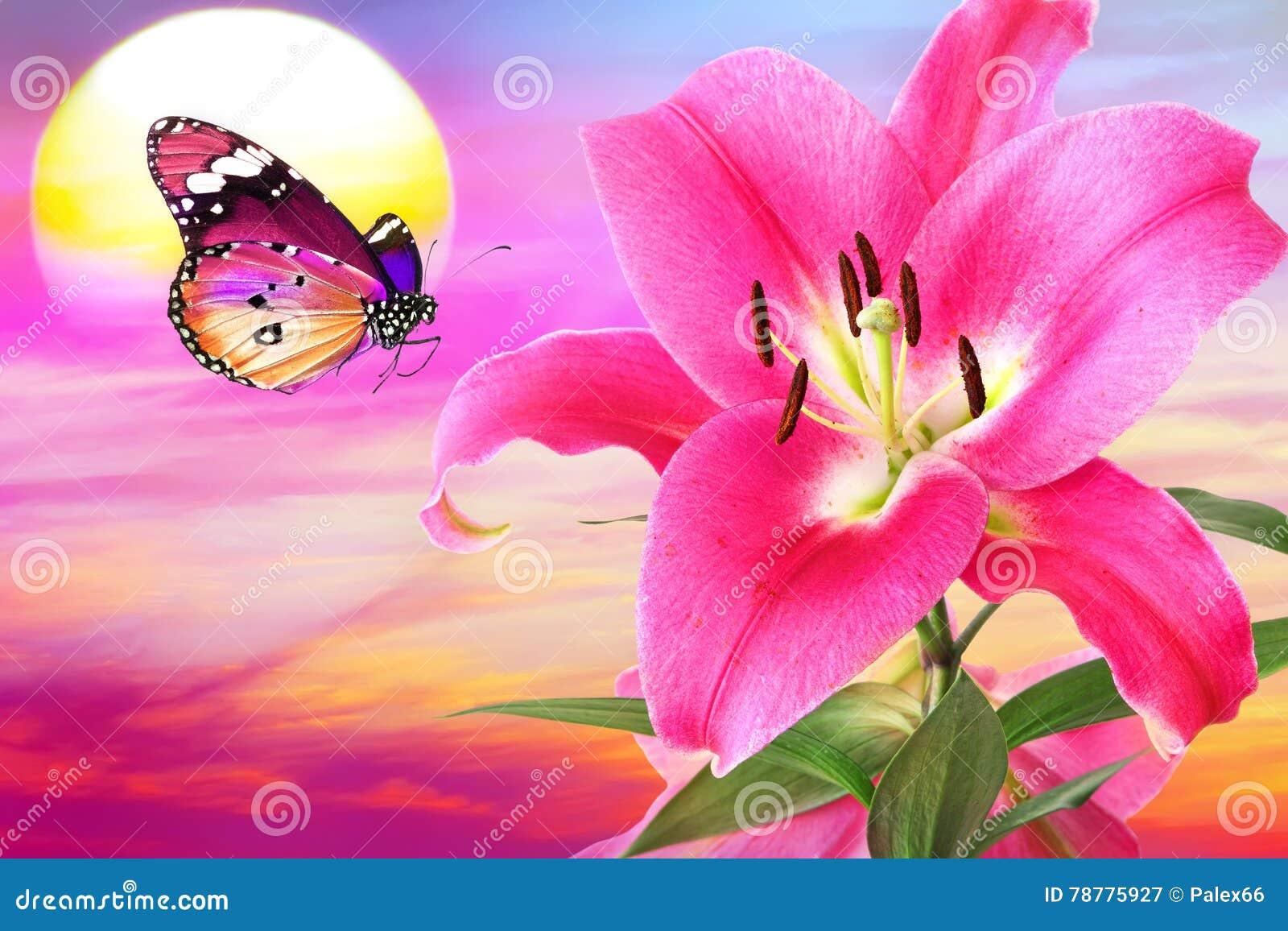 Lilac zonsondergangfantasie