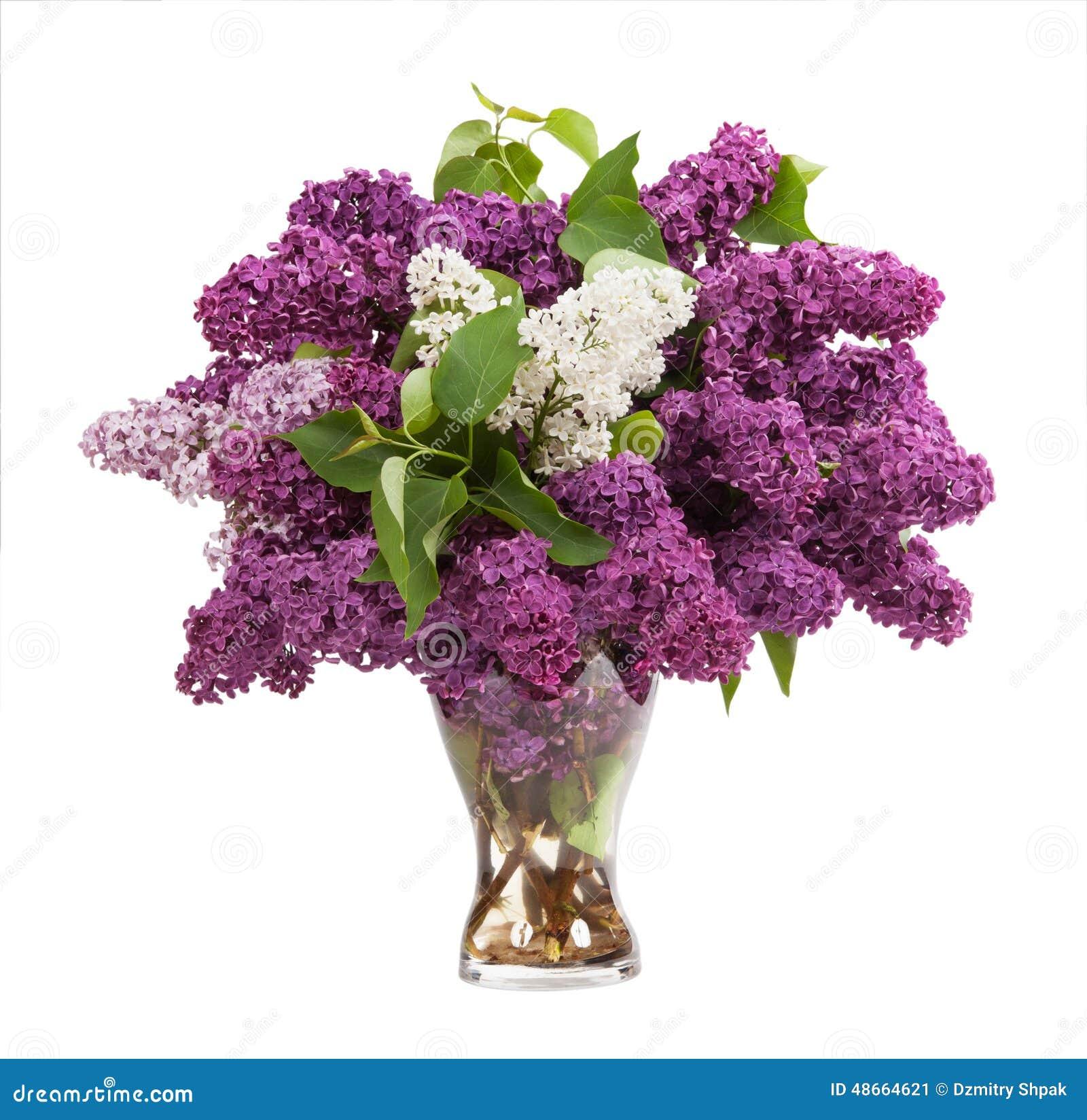 lilacs in a glass vase stock image image of still color 48664621. Black Bedroom Furniture Sets. Home Design Ideas