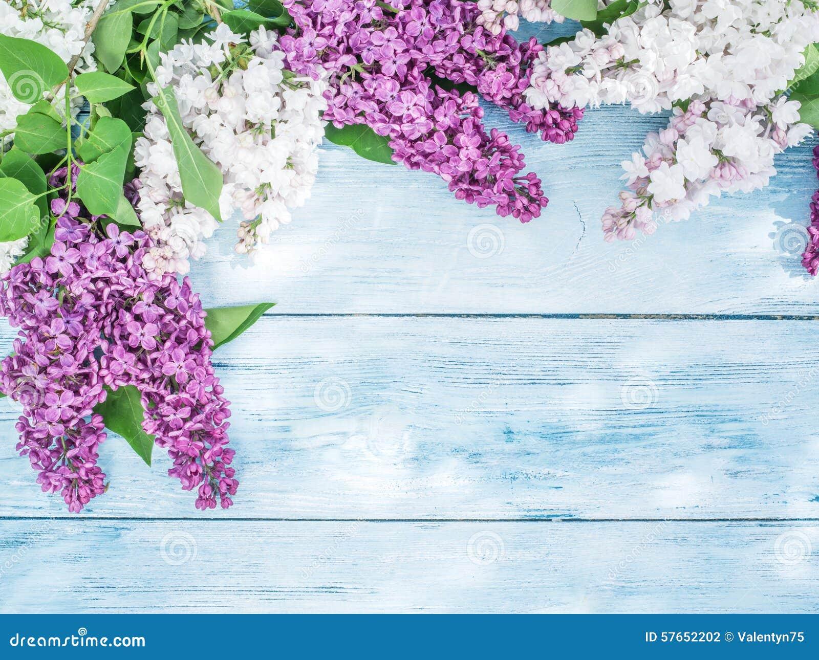 Lili kwitnący kwiaty
