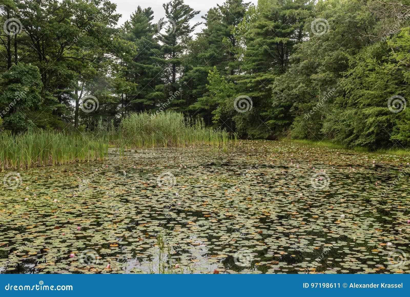 Lilienteich an der Mohonk-Konserve im Sommer
