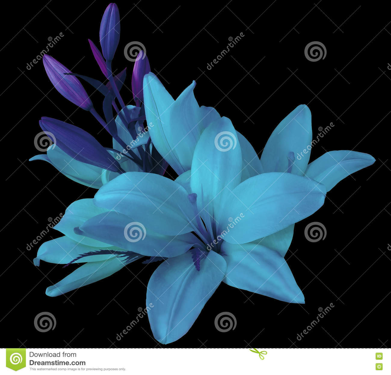 D background images - Lilies Blue Flowers On A Black Background Isolated With Clipping Path Beautiful Bouquet Of Lilies With Violet Leaves For D