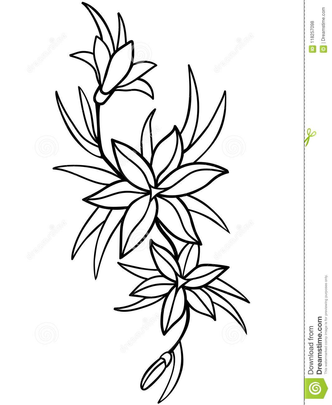 lilies  flowers with leaves  line drawing  for coloring stock vector
