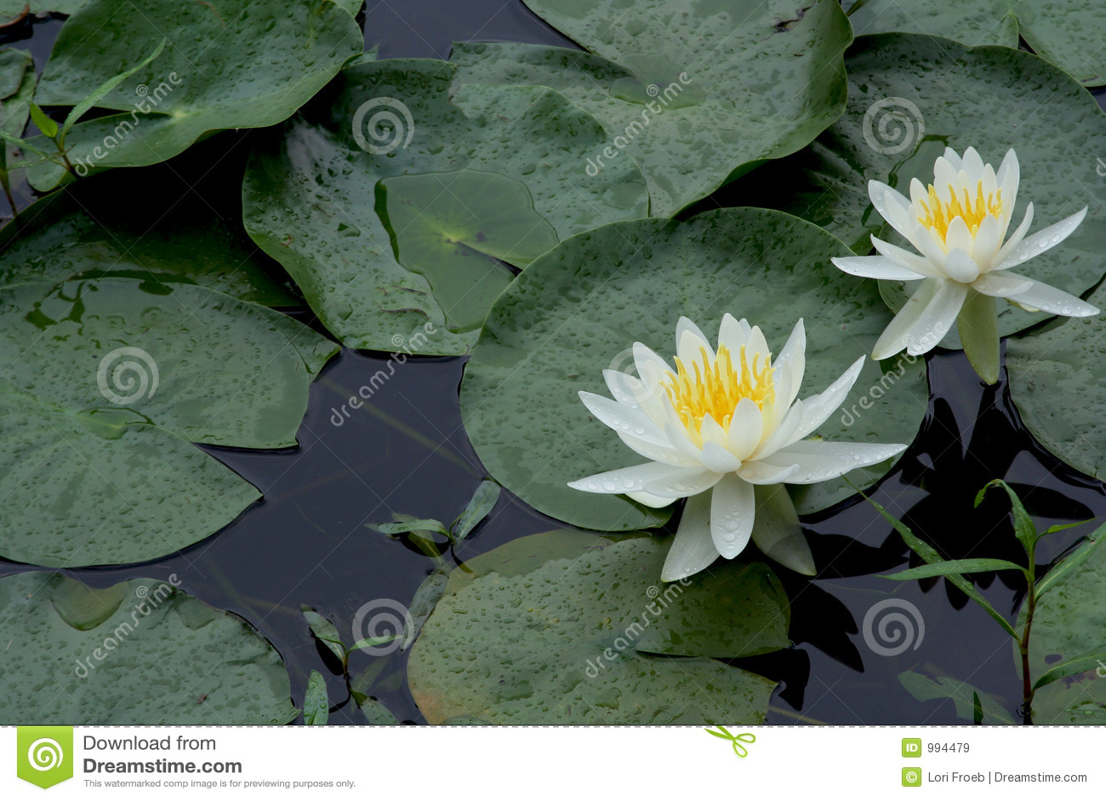 Liljar water white