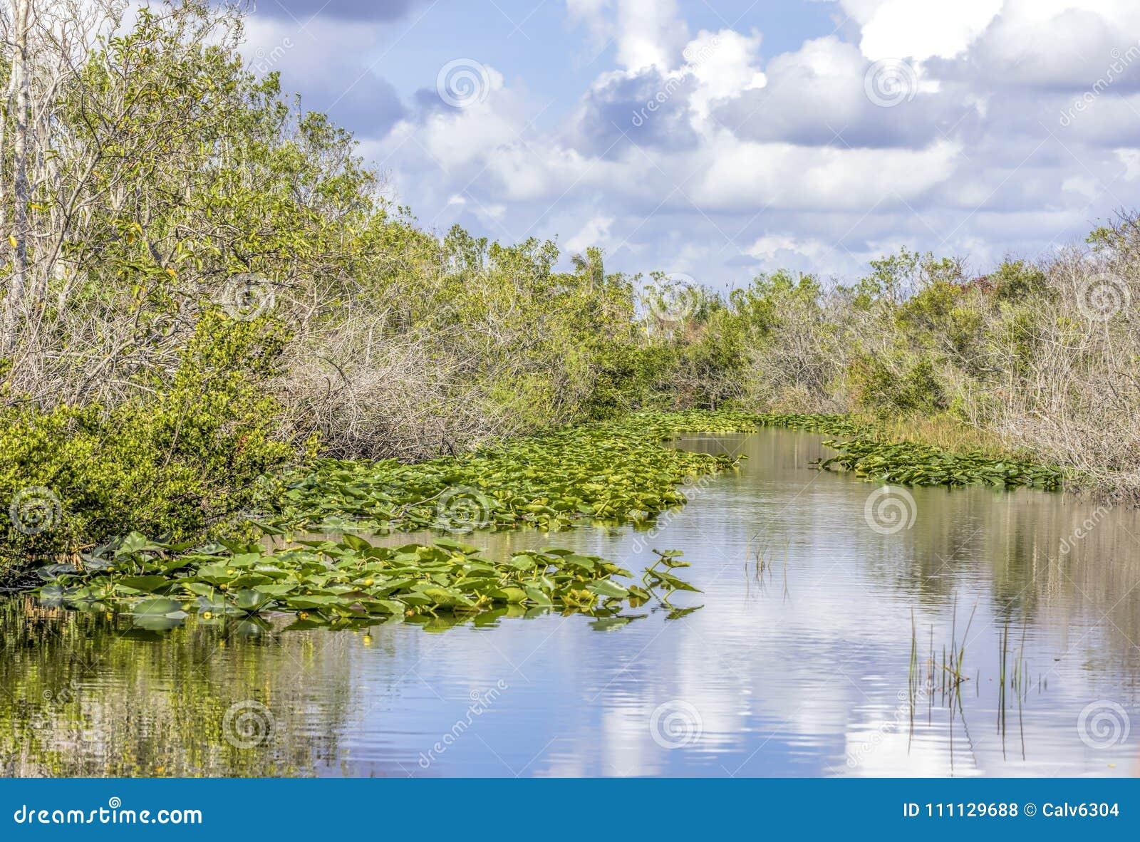 Liljor och sawgrass som växer på en vattenväg i Evergladesnationalparken i Florida, USA