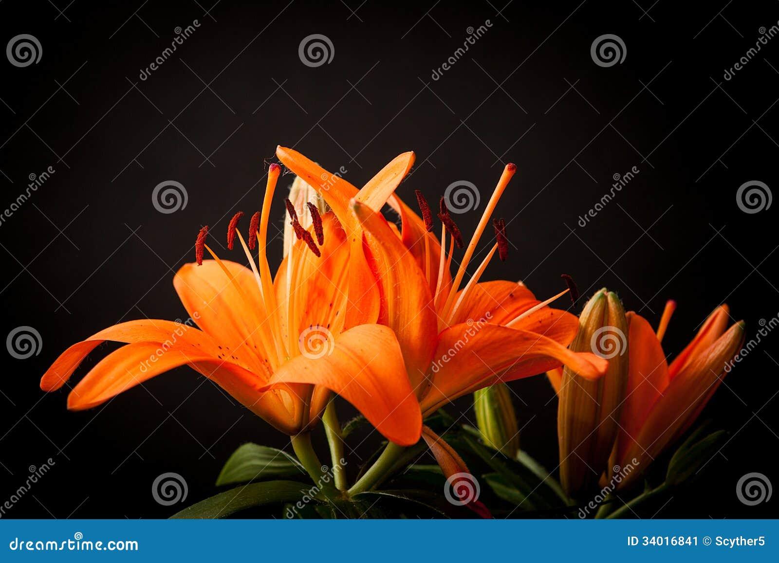 Liljor på en svart bakgrund