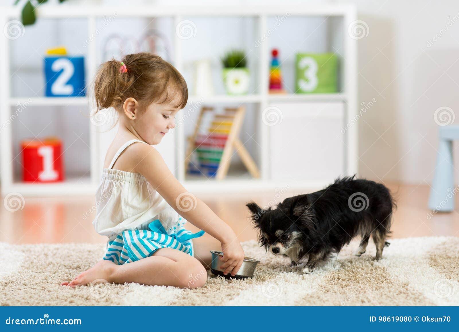 Lilla flickan matar Chihuahuahunden i barnrum Ungar daltar kamratskap
