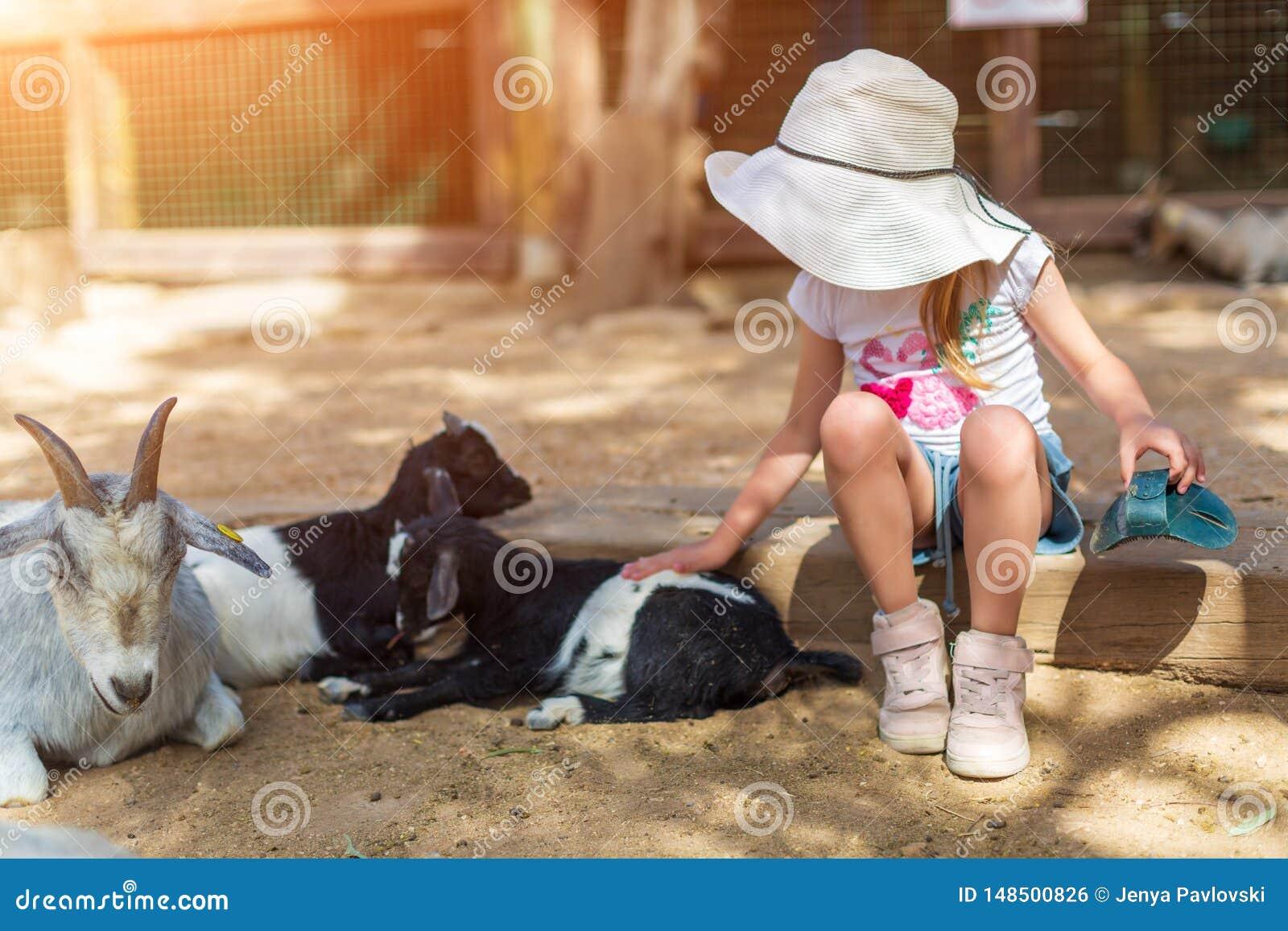 Lilla flickan matar en get p? barns dalta zoo
