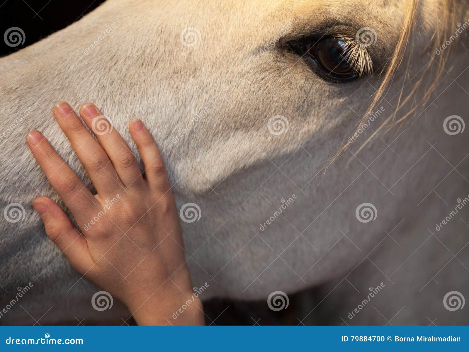 Lilla flickan som klappar en vit häst, genom försiktigt att smeka hans huvud med henne, gömma i handflatan handen