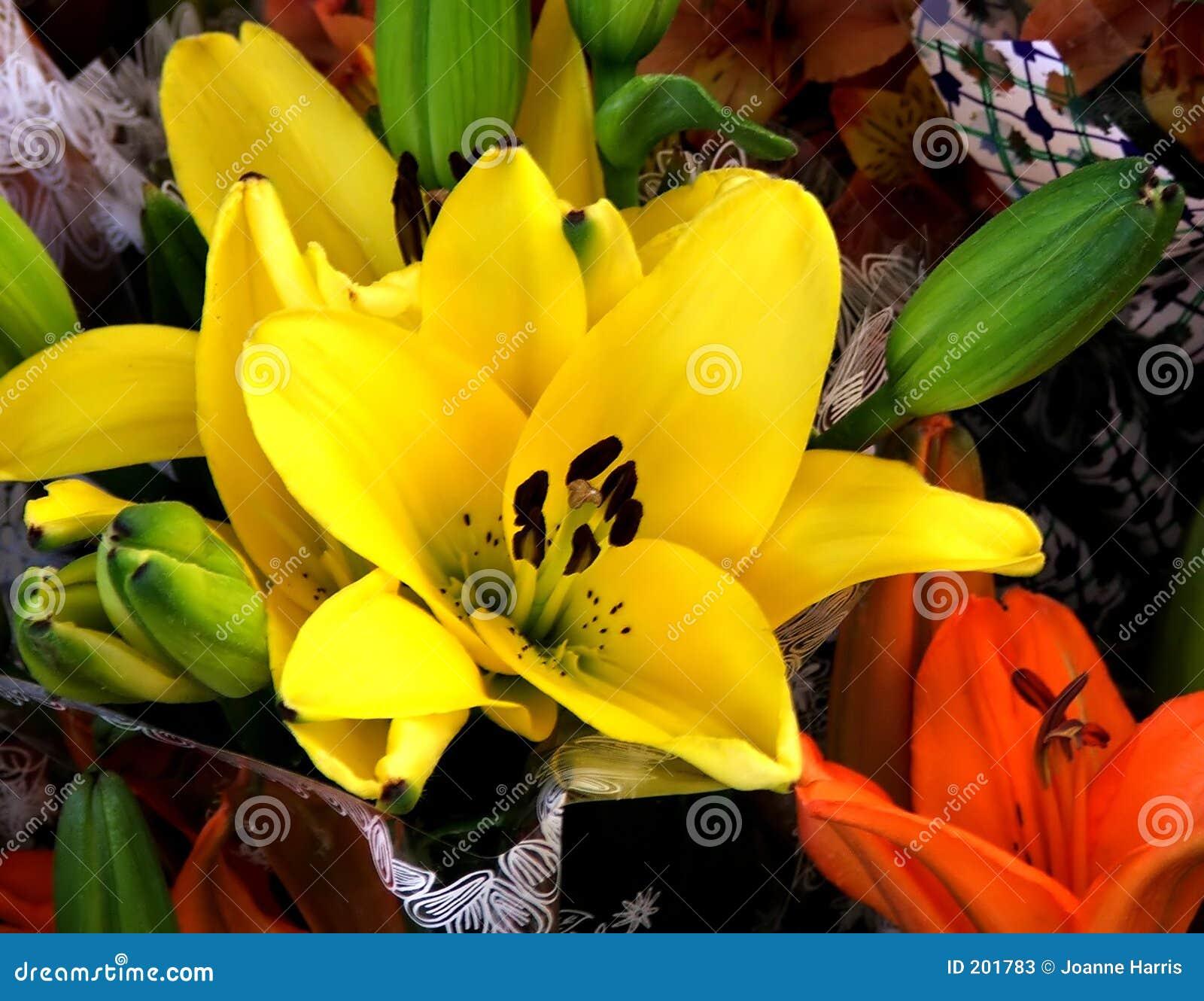 Lillium żółte kwiaty