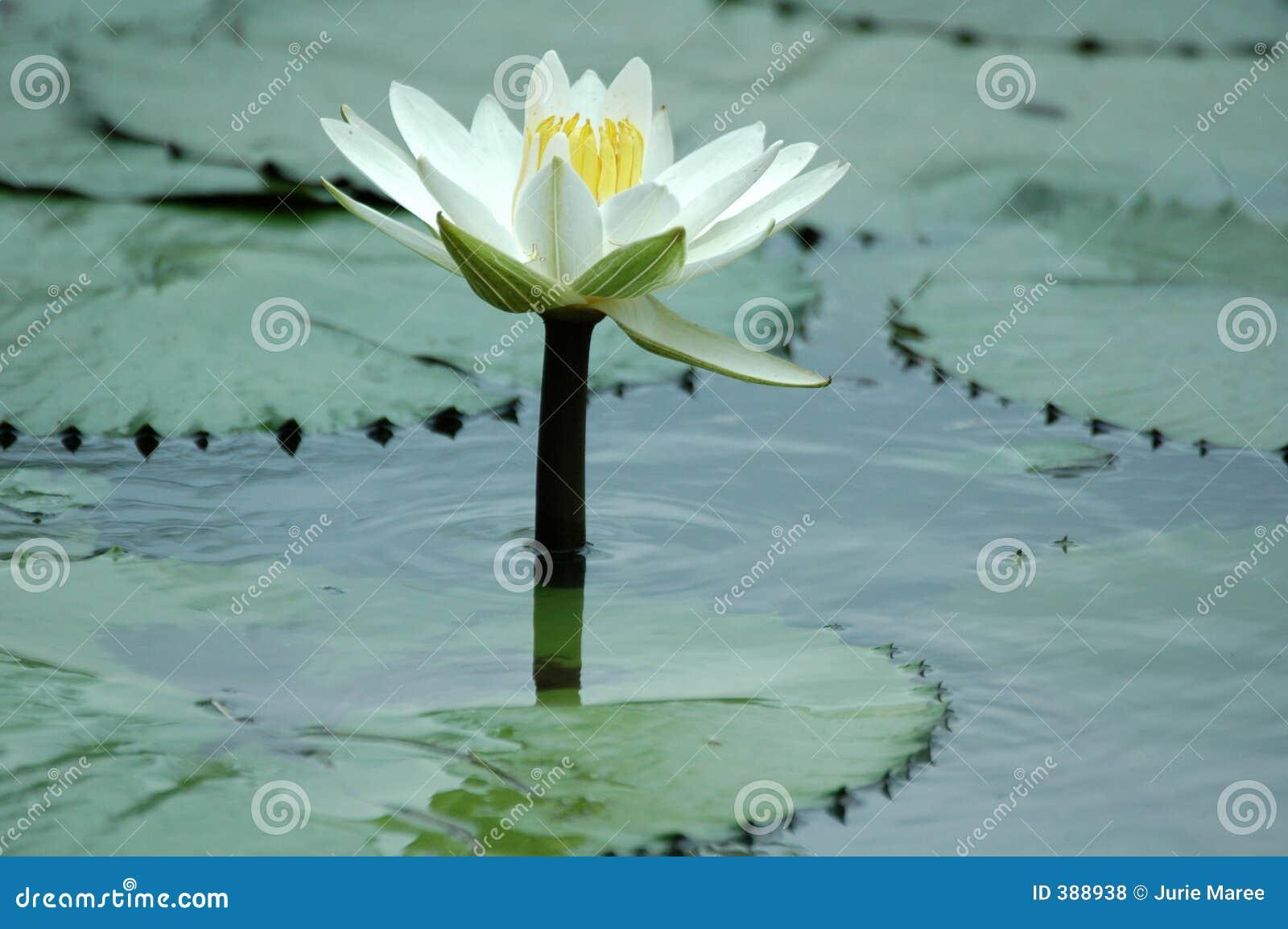Lilly ύδωρ