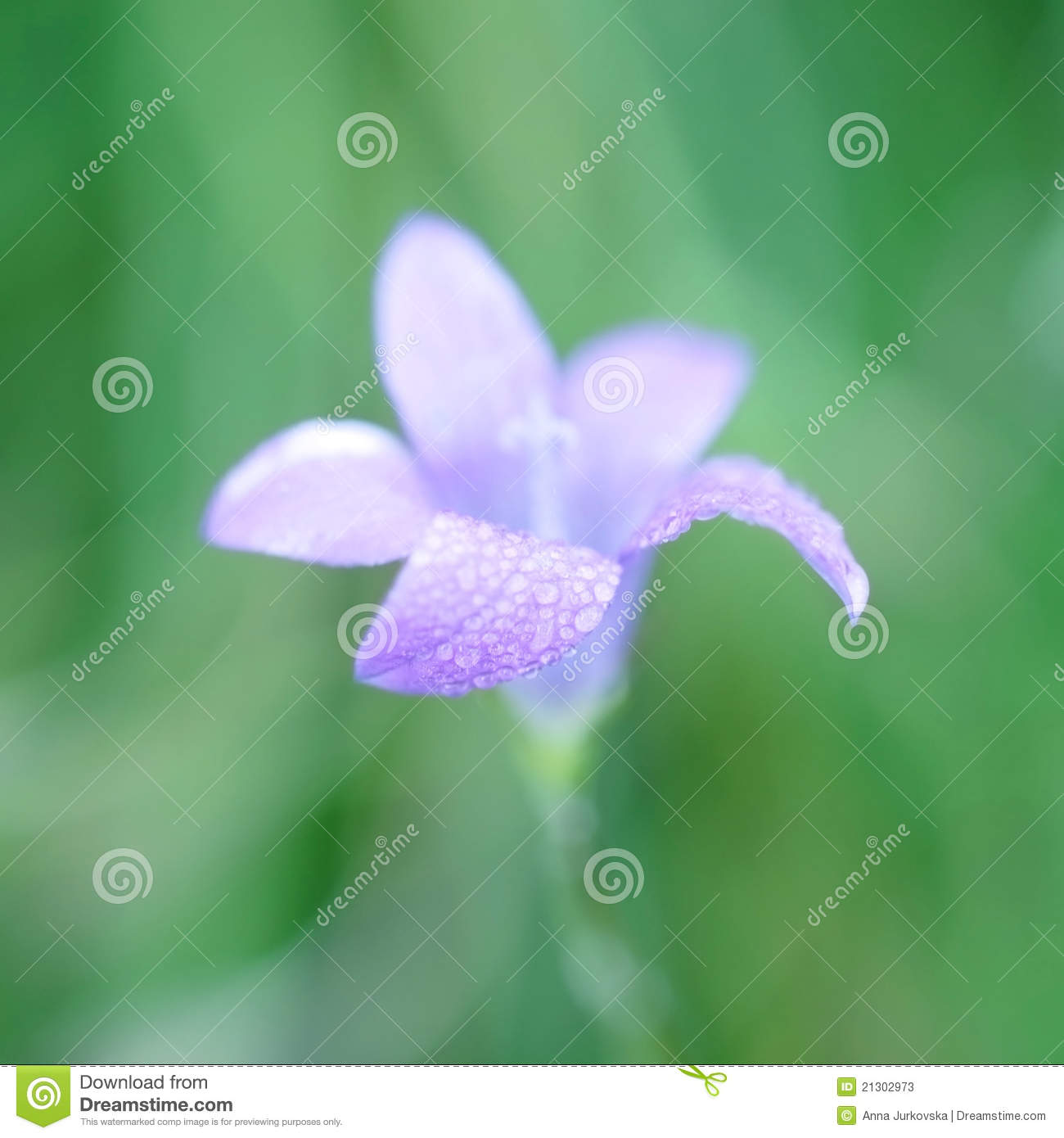 Lilly Bell Flower On Green Background Stock Image Image Of