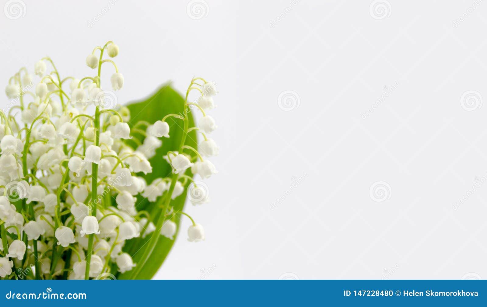 Lilly del ramo de las flores y de las hojas del valle aislado en el fondo blanco