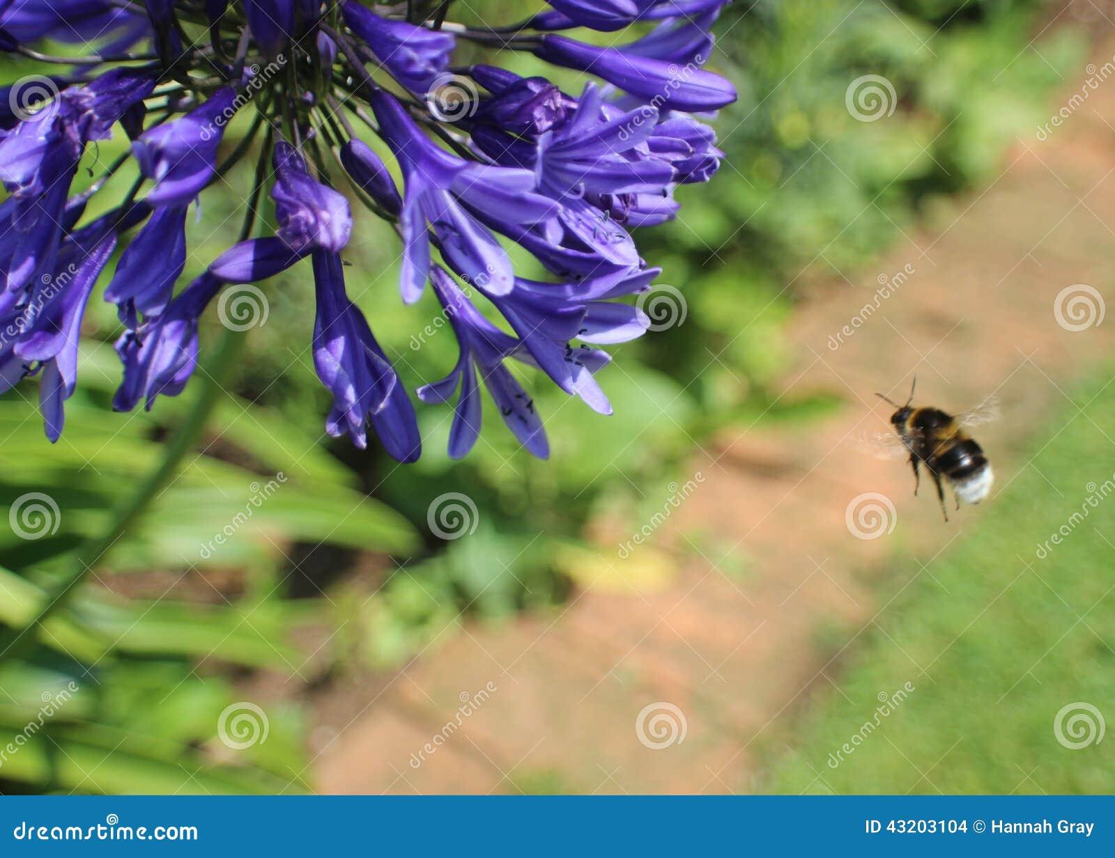 Download Lilor Planterar Med Closeupen Av Biet Arkivfoto - Bild av land, closeup: 43203104