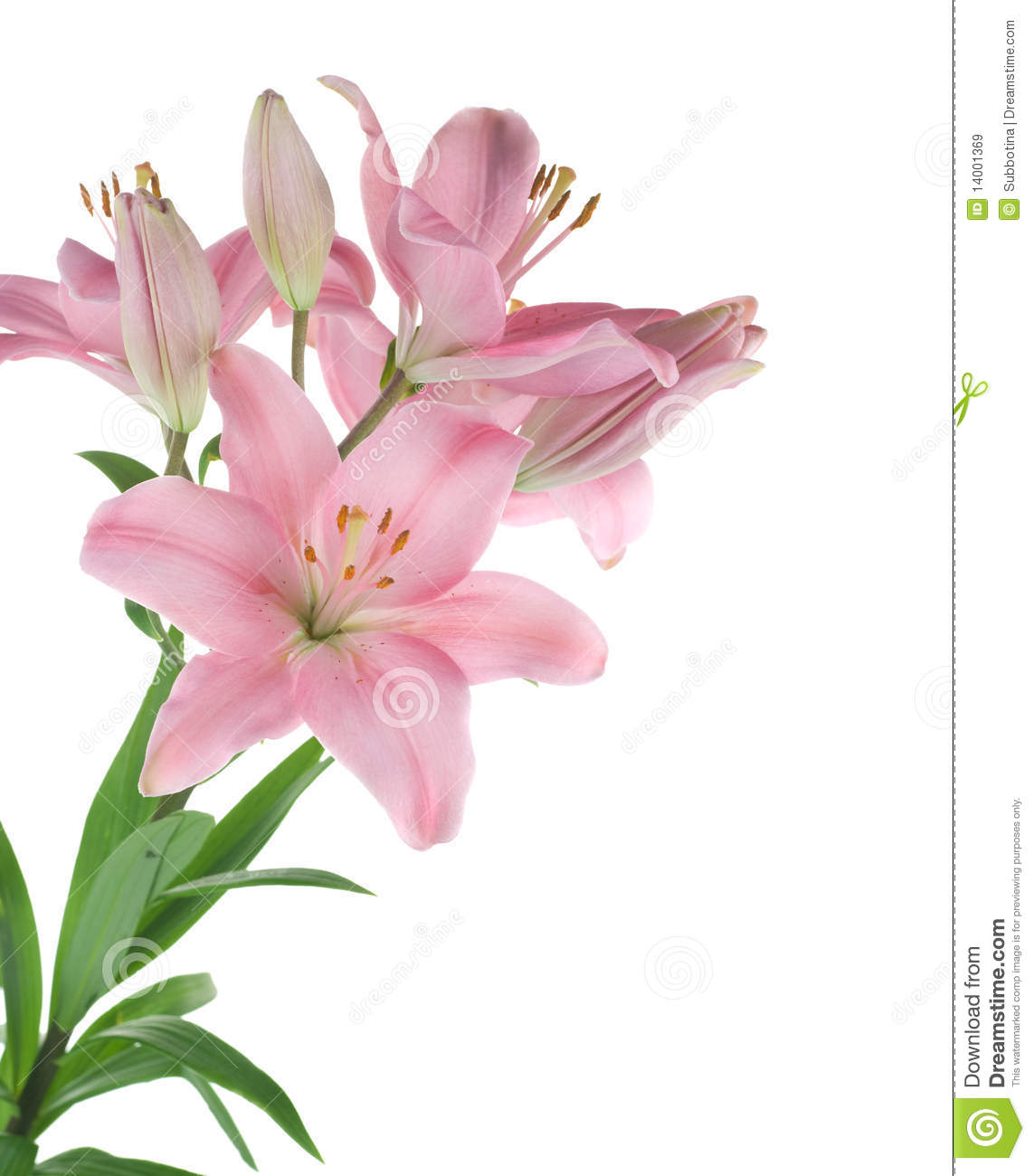 Download Lily stock image. Image of congratulation, closeup, bouquet - 14001369