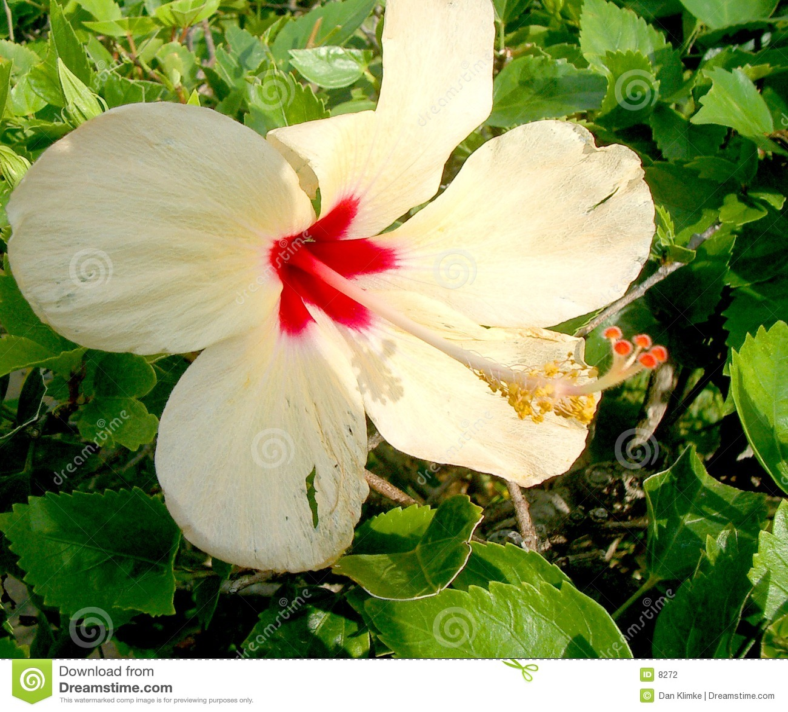 Lily cancun