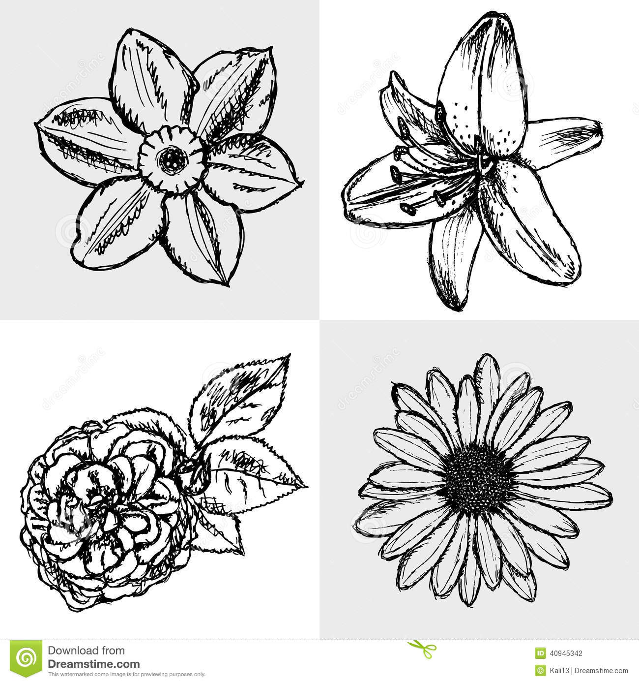 Daisy Tattoo Outline: Lily, Daisy And Rose, Narcissus Sketch, Seamless Pattern