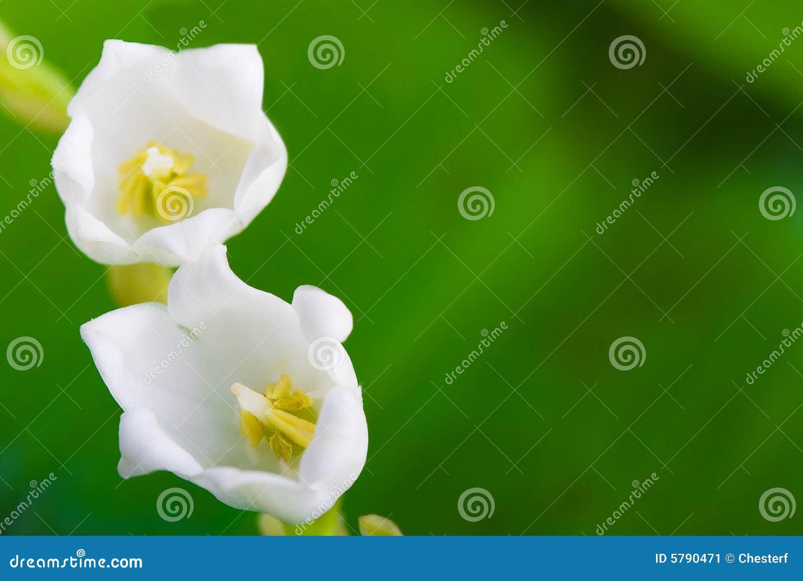 Lily dolinę makron kwiaty
