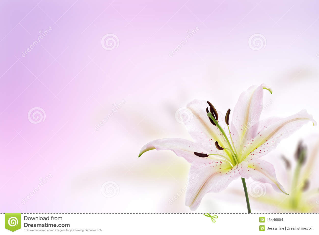 Lily Flower Background Stock Images Image 18446004