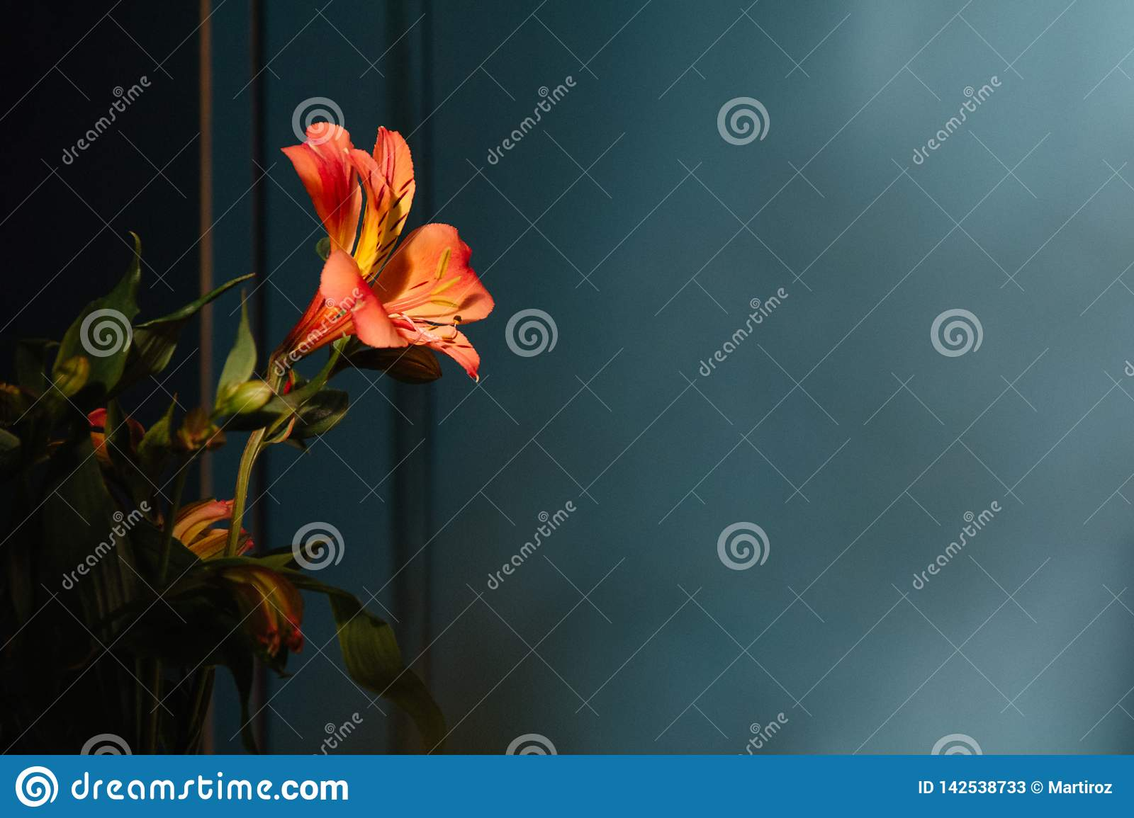 Lily flower on the dark background. Condolence card. Empty copy space