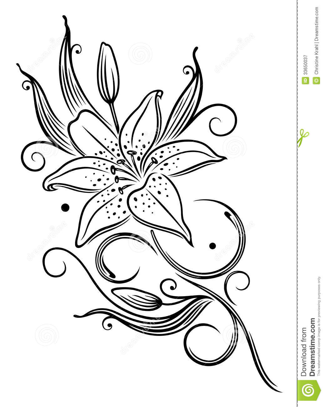 lily flower royalty free stock photography image 33650037