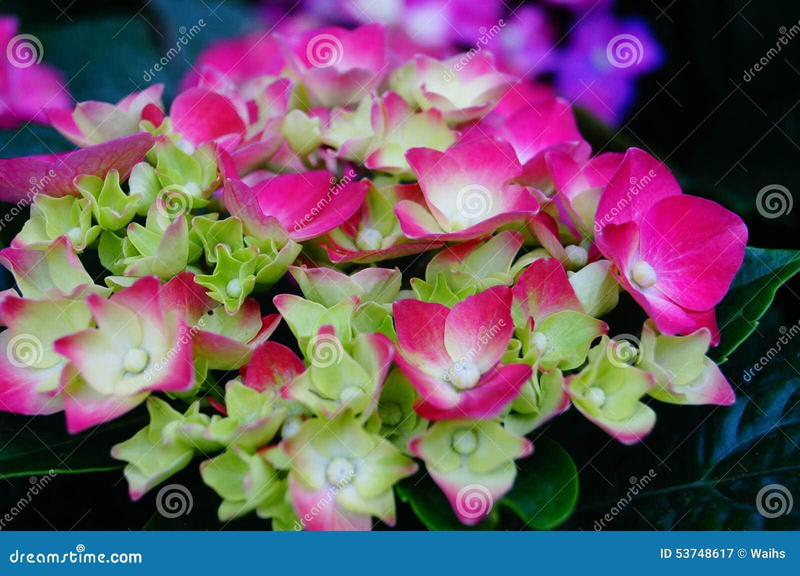 Lily Flower Garden Shop Sale Petals Plant Natural Landscape Tourism Background