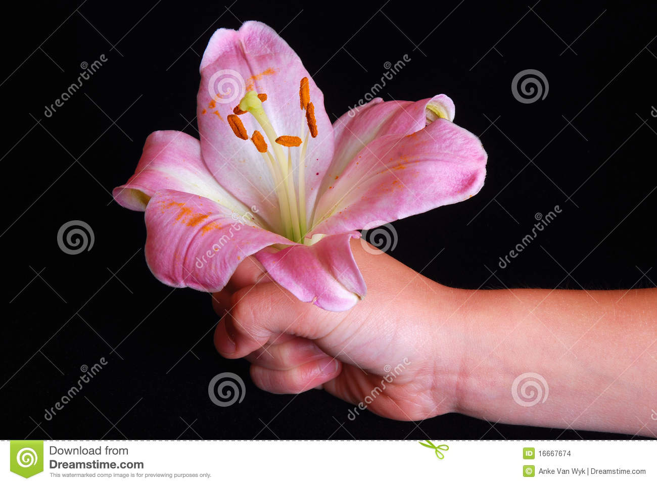 child giving a flower stock photo image of flowers caucasian