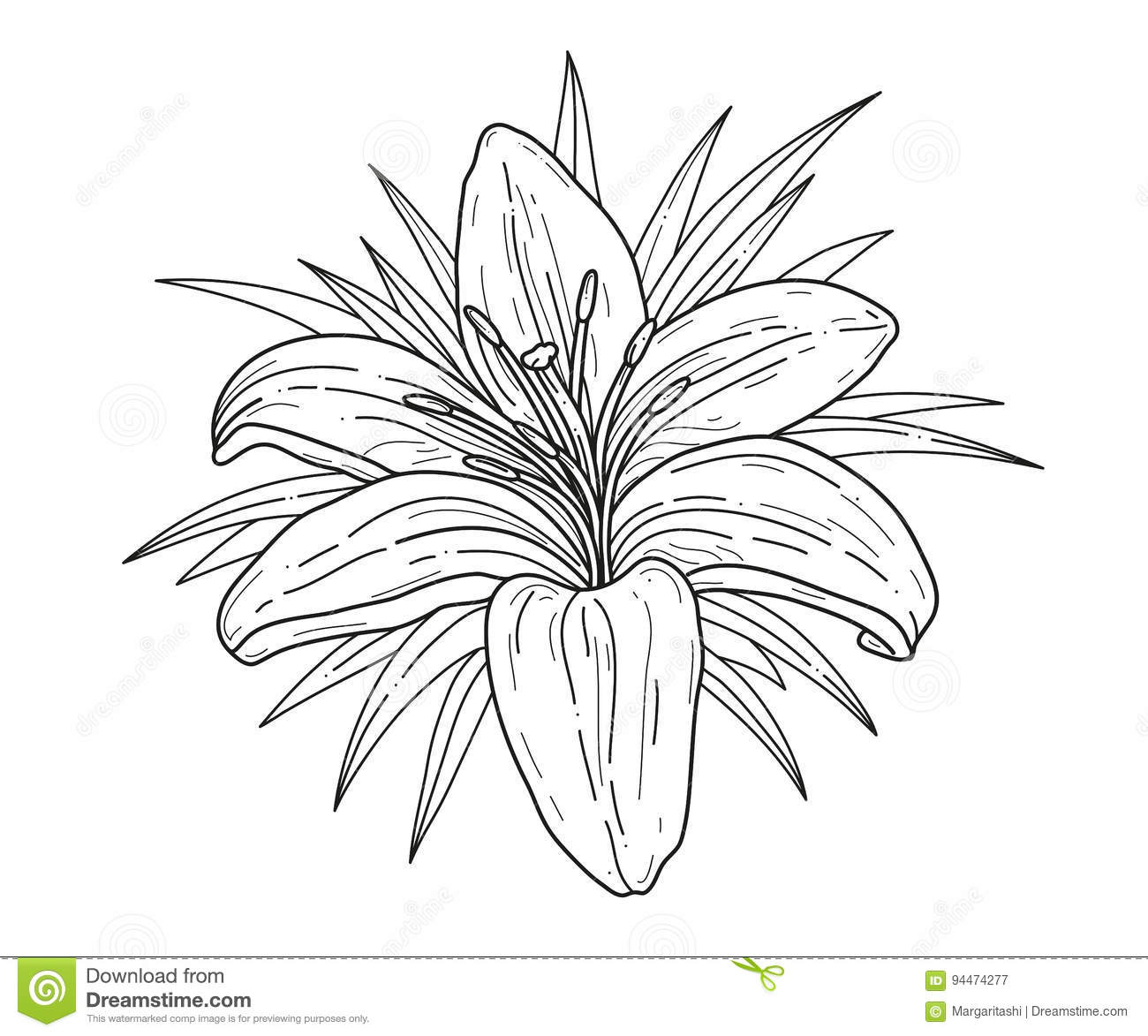 Lily flower monochrome vector illustration beautiful tiger lilly background beautiful cards design element flower greeting illustration invitations isolated lilly dhlflorist Images