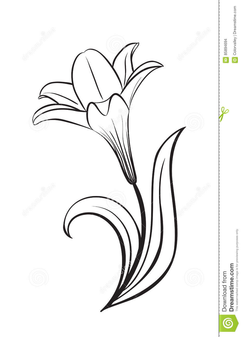 Lily flower vector icon stock vector