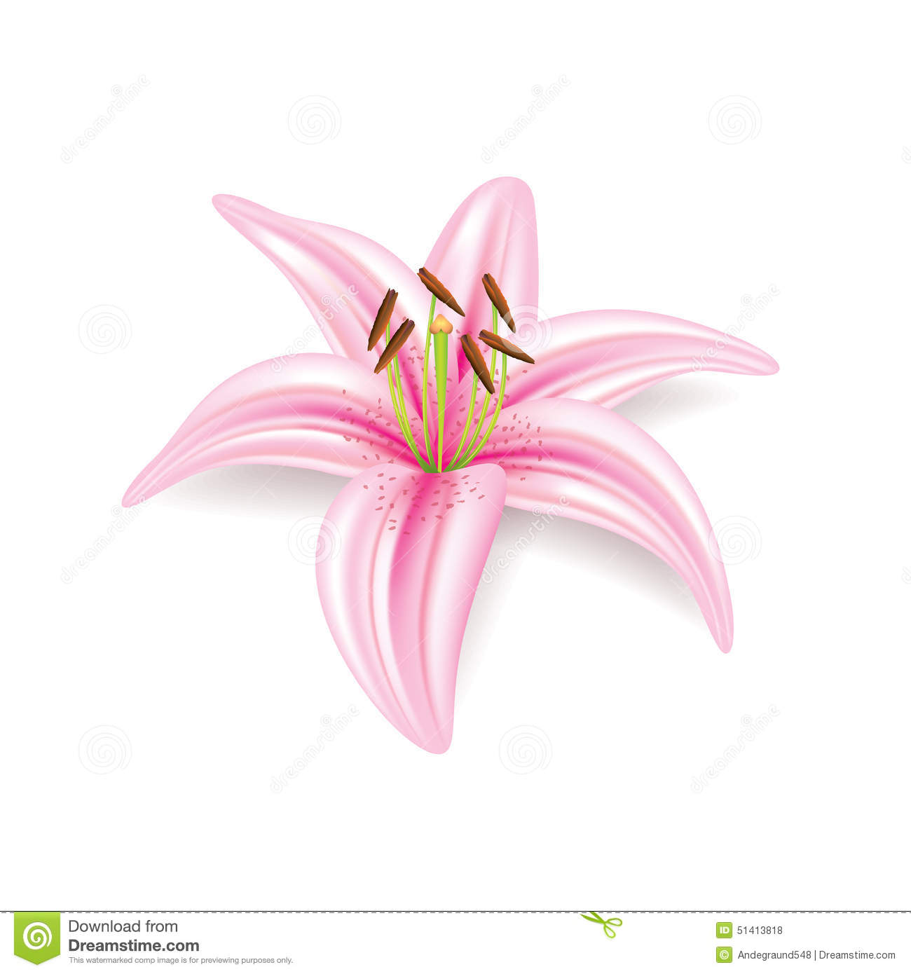 Lily Flower On White Vector Stock Vector - Image: 51413818