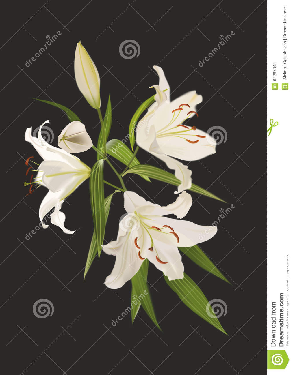 Lily Flowers On A Black Background Stock Vector Illustration Of