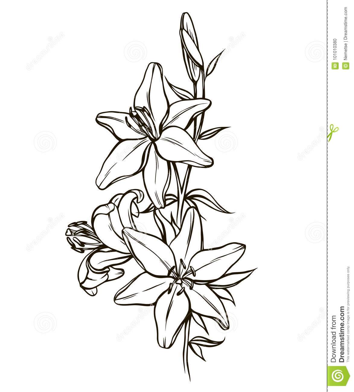 Illustration beautiful flower profile nature pictures www lily flowers black and white stock vector illustration of nature jpg 1173x1300 illustration beautiful flower profile izmirmasajfo