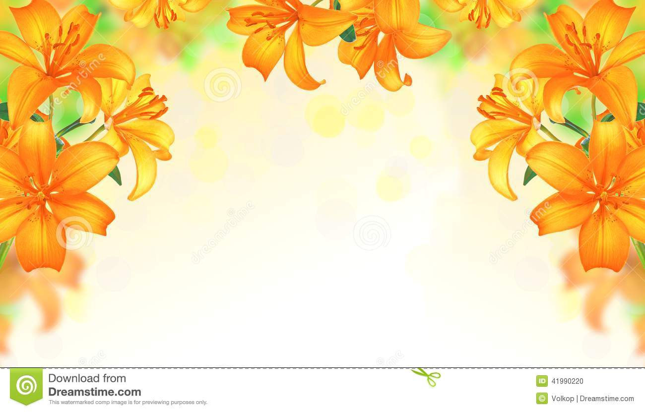 Lily Flowers Border Design.Summer Flowers Stock Photo - Image ...