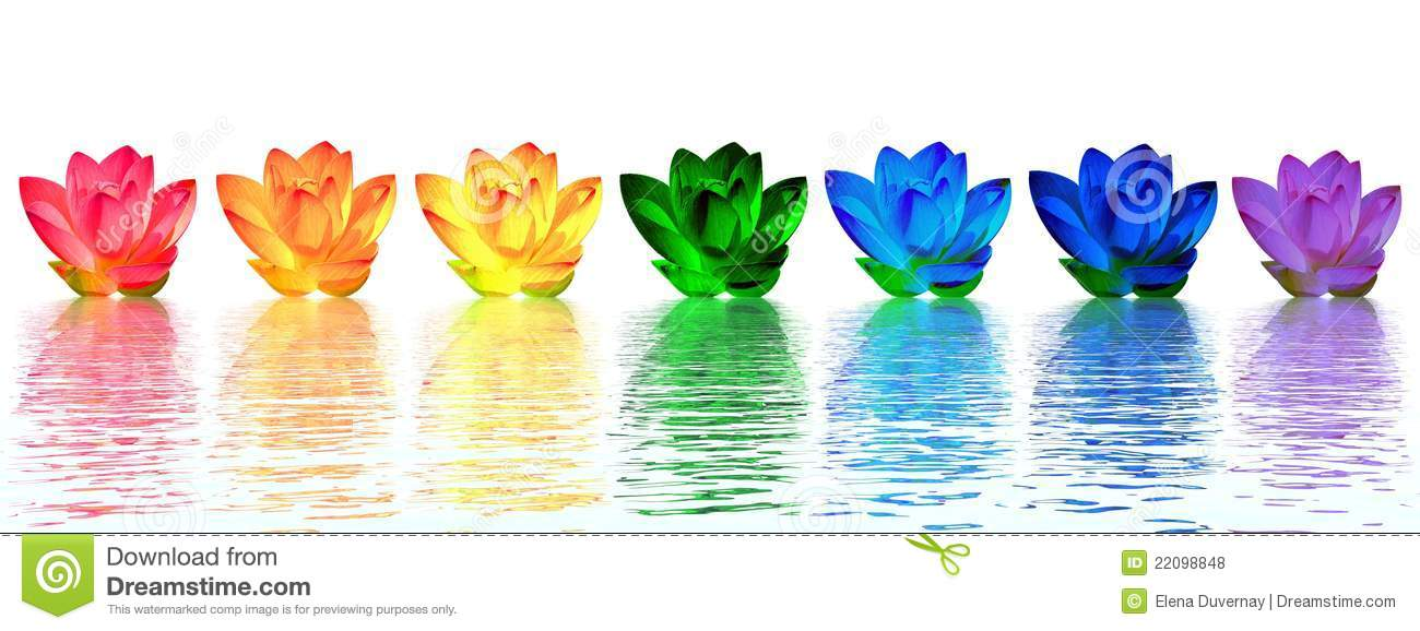 lily flowers chakras stock illustration  illustration of peace