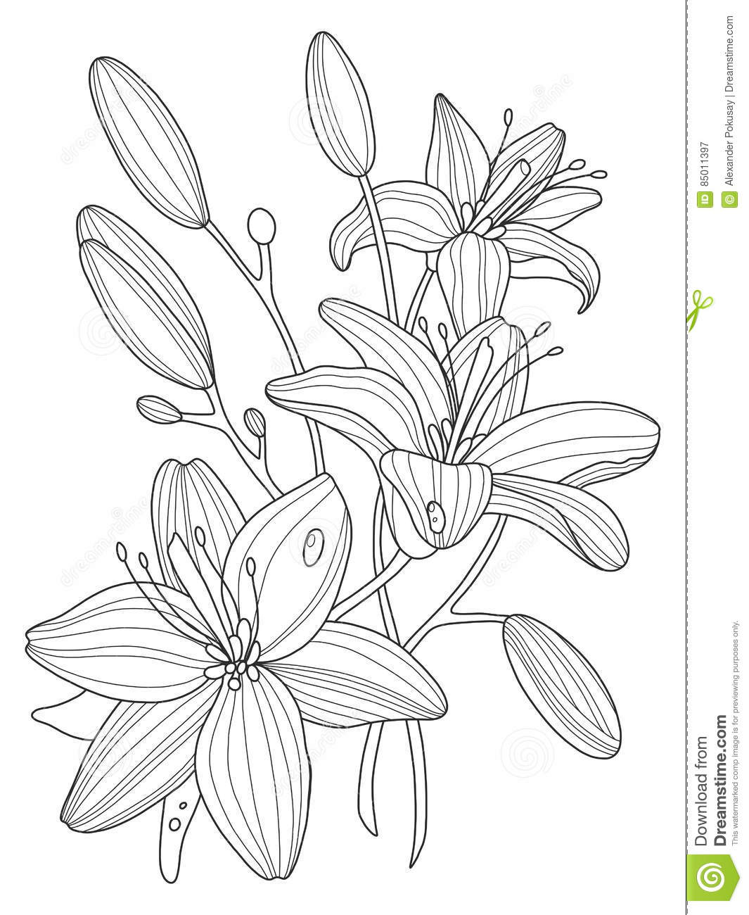 Lily flowers coloring book vector illustration stock vector download lily flowers coloring book vector illustration stock vector illustration of mandala ornate izmirmasajfo