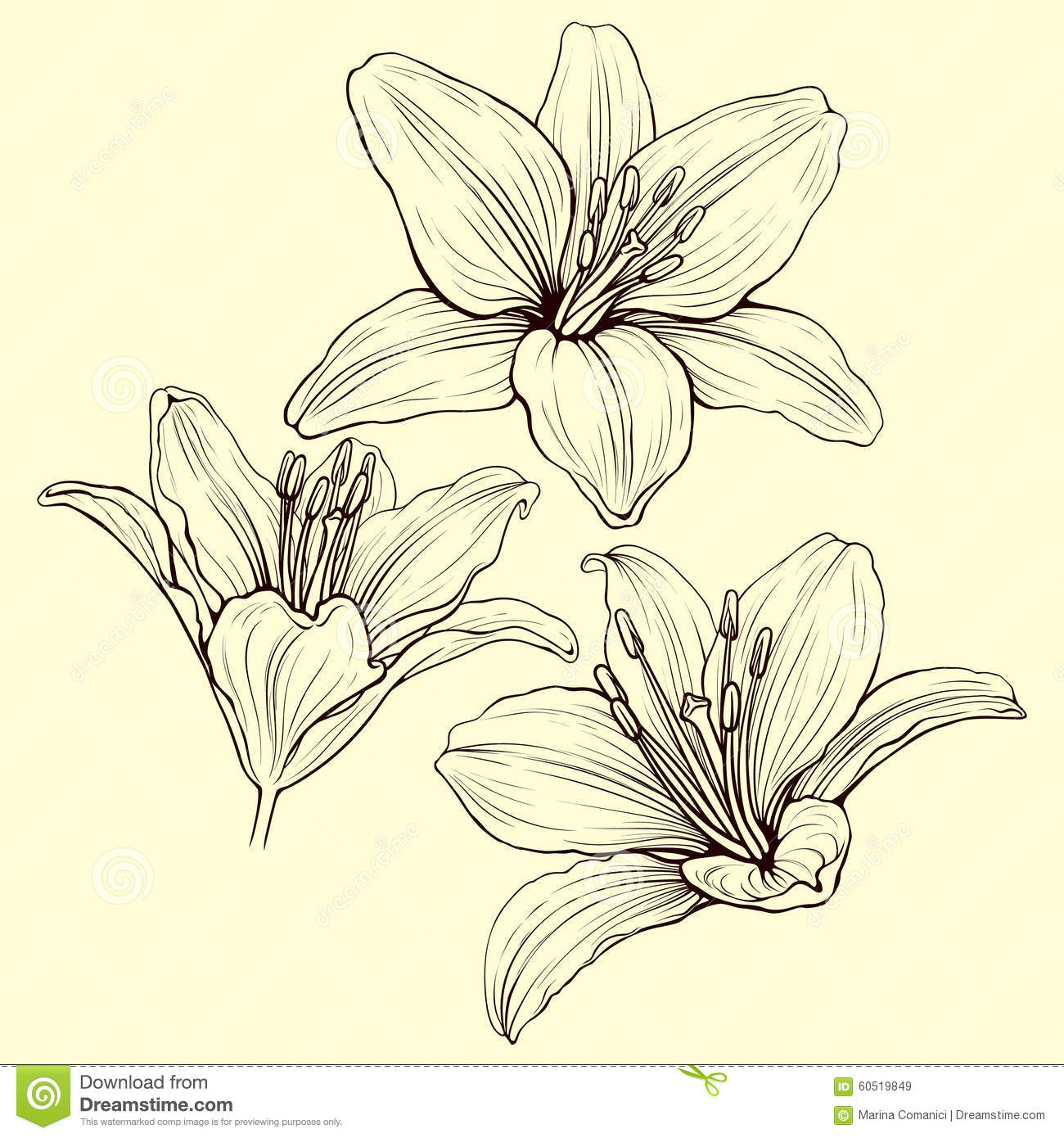 Lily ink stock vector illustration of design nature 60519849 izmirmasajfo