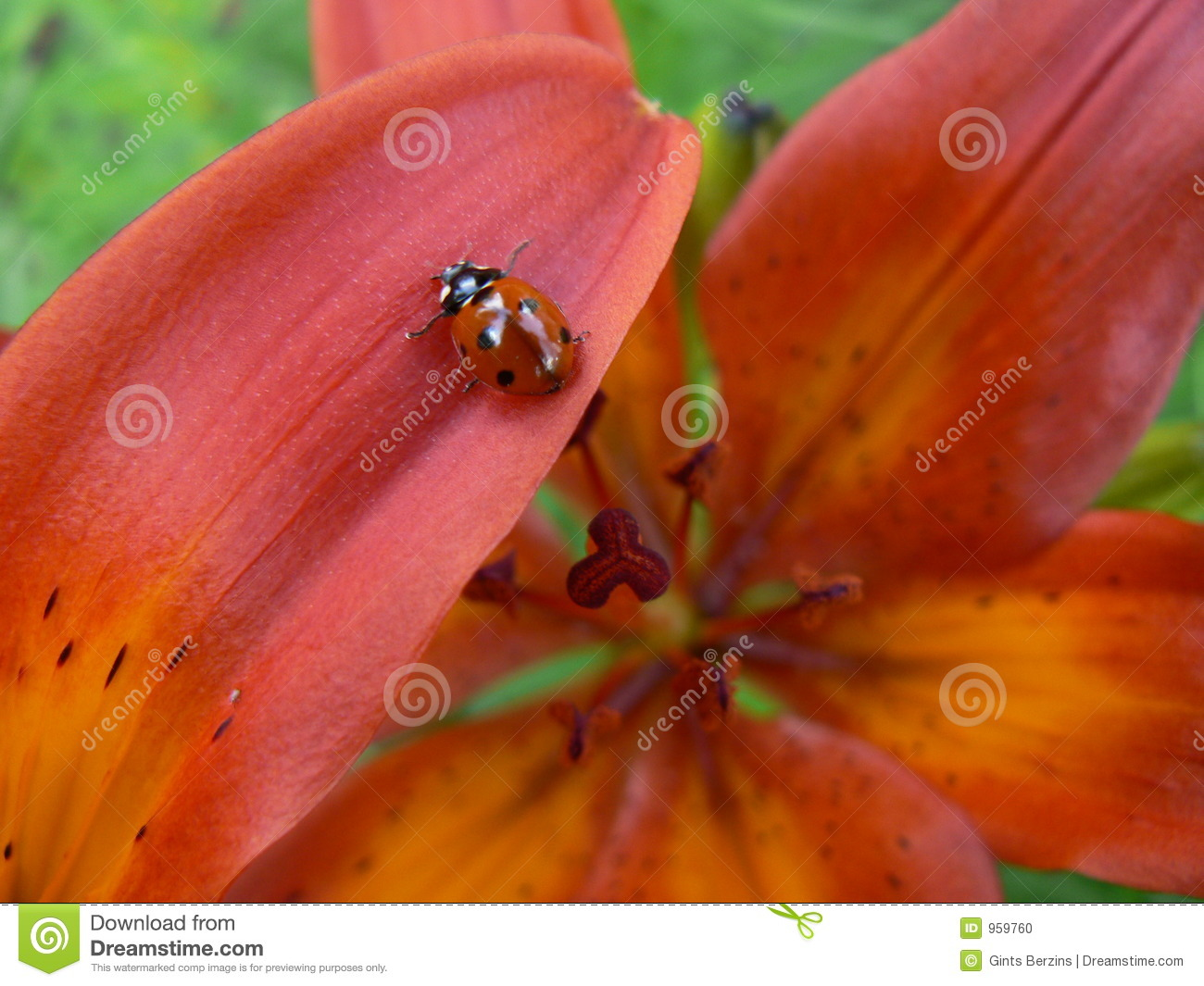Lily and ladybird